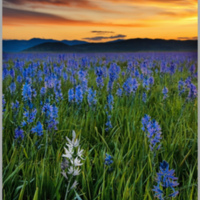 Sunrise on Camas Prairie